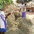 Adama's Peanut Harvest