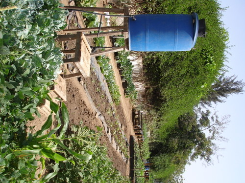 Barrel Drip Irrigation