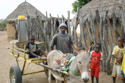 Sada, donkey and sons