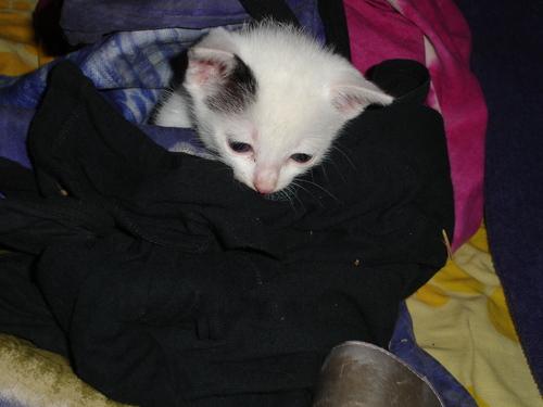 Kitten Number 3