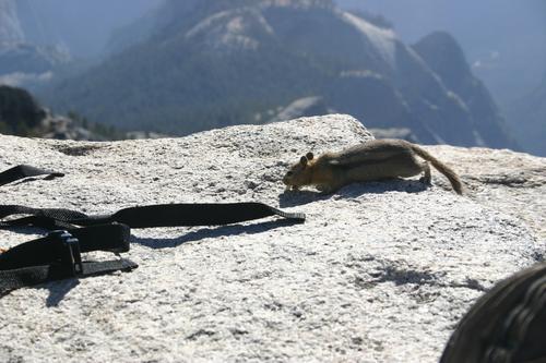 Yosemite_don_pedro_036